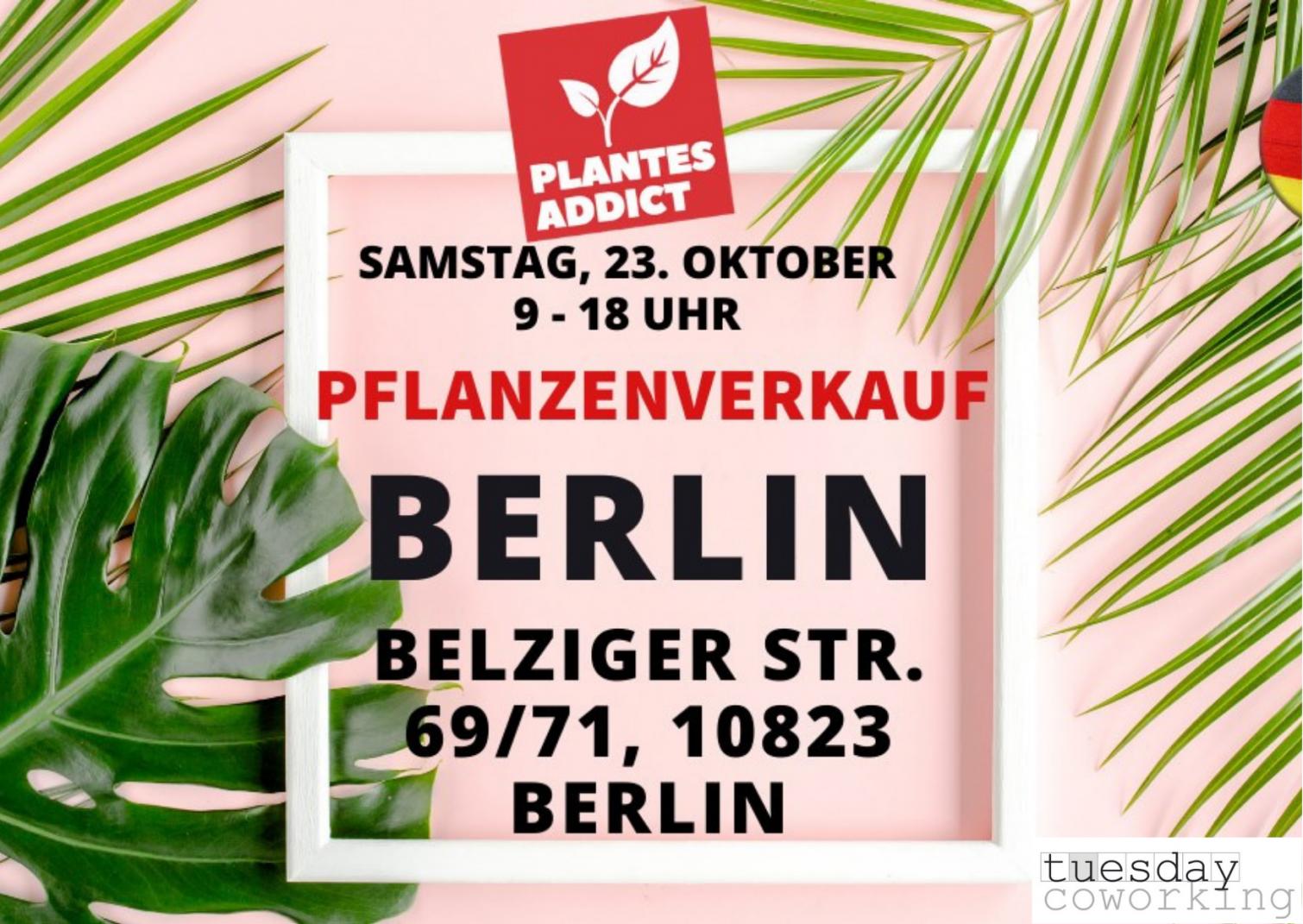 Pflanzenverkauf mit Plantes Addict Berlin